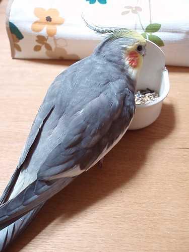 hinomarunosu2008111102.jpg