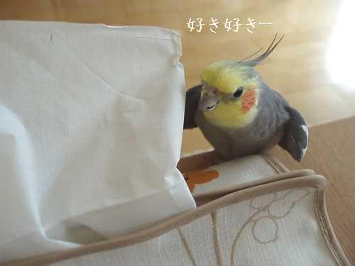 hinomarunosu20081113002.jpg