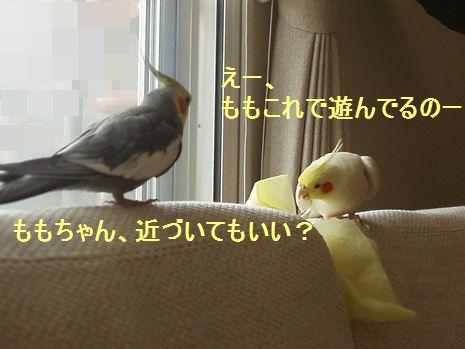 momohinohino002.jpg