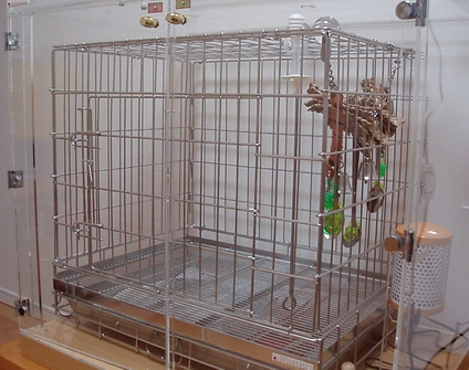 yomogi20081103001.jpg