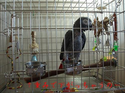 yomogi2008110304.jpg