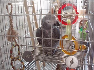 yomogi2008110309.jpg