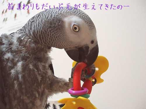 yomogi2008111302.jpg