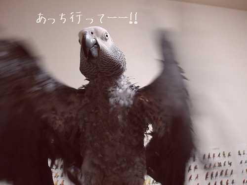 yomogi2008111702.jpg
