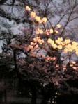 kyoto5.jpg