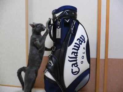 golfbag2.jpg
