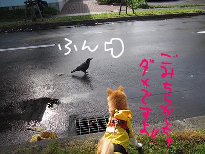 cはな (13)