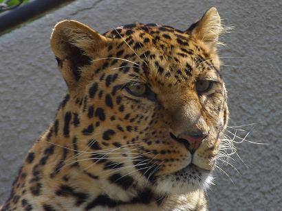 zoo_1_bg_072702.jpg