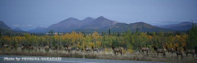 Sep.3-Caribou.jpg