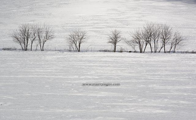 snowland1.jpg