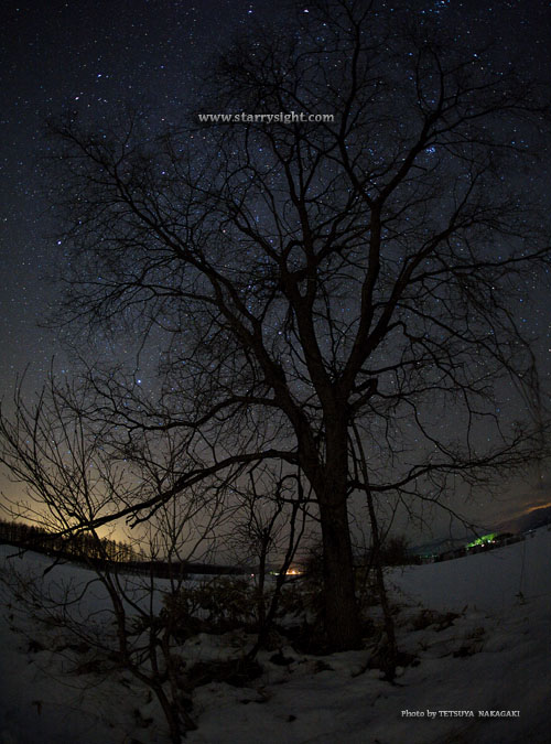 tokachi-winterstars-1.jpg