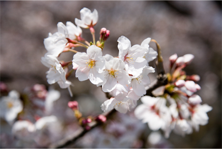 花便り ~2007・春~