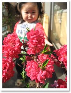 我が家の桃の花。