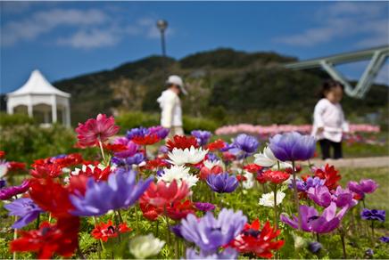 海を越えて花の楽園