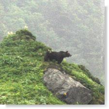 小高い丘の上に熊の親子・・・