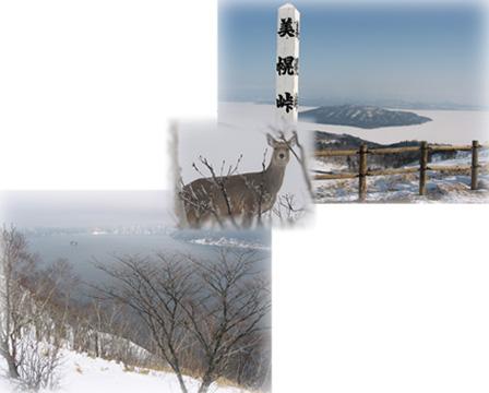 美幌峠・摩周湖・・・鹿