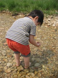 サワガニハウス用の砂利・石を取るとんきち
