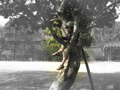 木の上の人となったとんきち