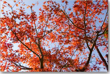 紅葉ももう終わり・・・