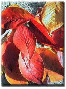 色とりどりの落ち葉たち