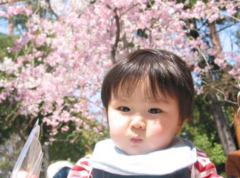 1歳を迎える直前、桜が満開の遊園地