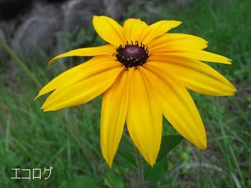 エコログ花