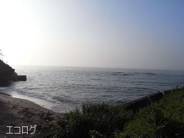 エコログ海