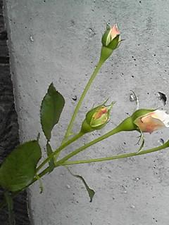 081013_1050~03