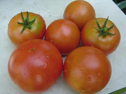 tomate2.jpg