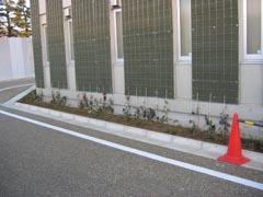 芦花公園の壁面緑1月