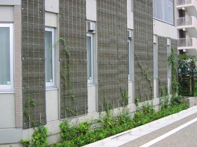 芦花公園の壁面緑化.