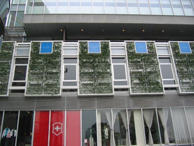 青山の壁面緑化