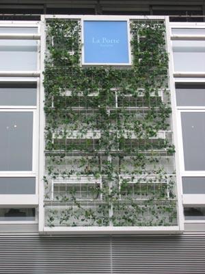 青山の壁面緑化-詳細