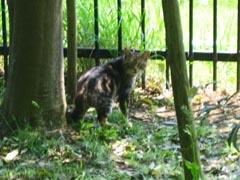 緑山の猫-7
