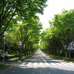 緑山の欅並木-8