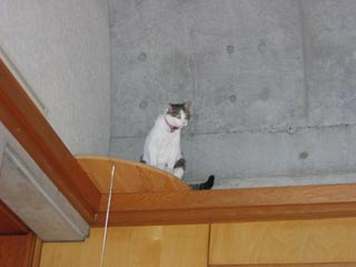 猫台に乗ってボ-ゼン.