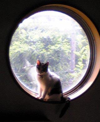 丸窓で可愛い凛