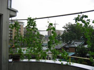 台風状況9-7テラス-1
