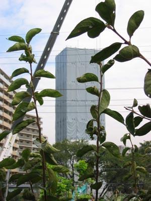 芦花団地給水塔3