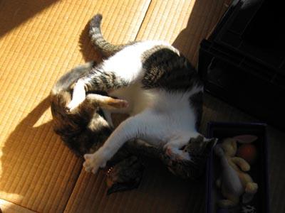 猫キック合戦-2.
