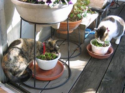 2人で猫草-1.