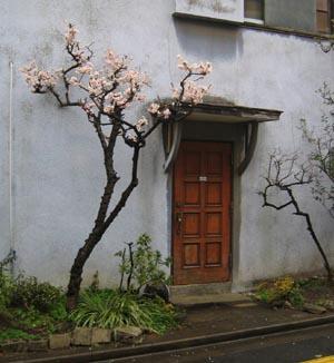 梅と玄関.