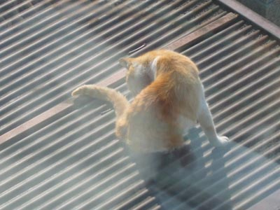 くつろぐ外猫