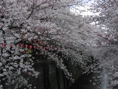 目黒川-1.