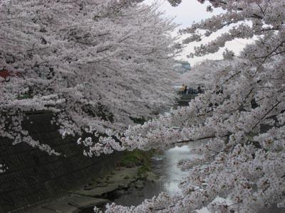 恩田川-1.jpg