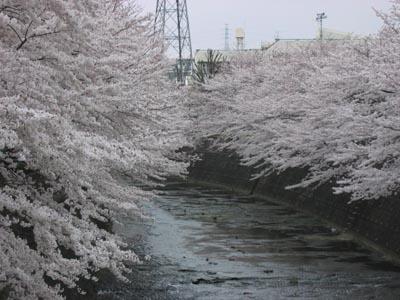 恩田川-2.