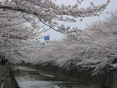 恩田川-3