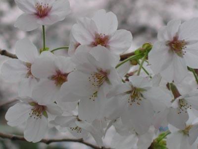 恩田川-4