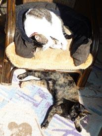 椅子の上下3.