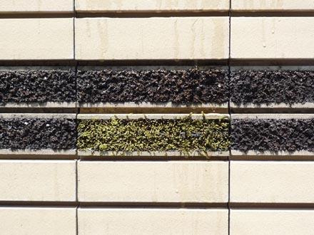 府中の壁面緑化詳細